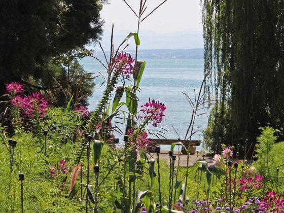 Blumen der Insel Mainau mit Blick auf den Bodensee